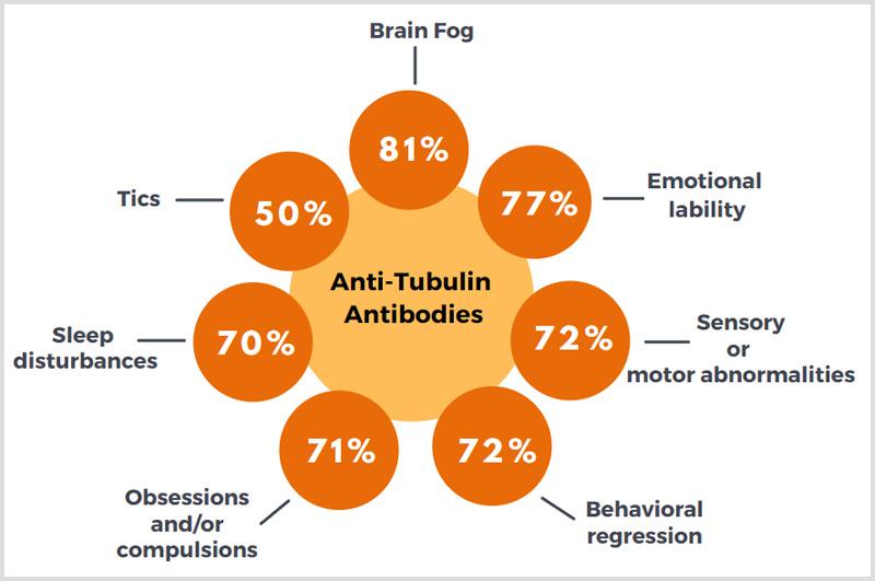 Anti-Tubulin Antibodies